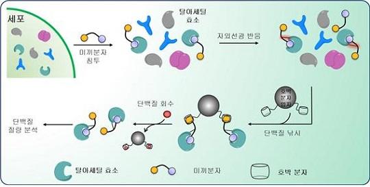 초분자화학 기반 단백질 낚시법 [사진=포스텍]