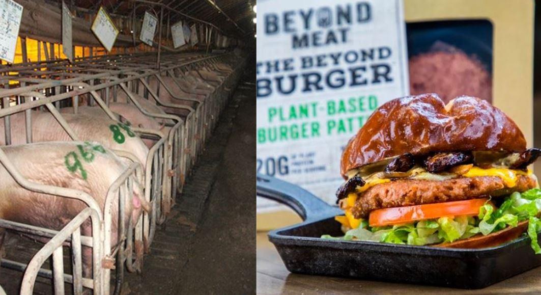 공장식으로 밀집사육되고 있는 돼지 농장과 식물성고기 비욘드미트 제품.ⓒ카라,동원F&B