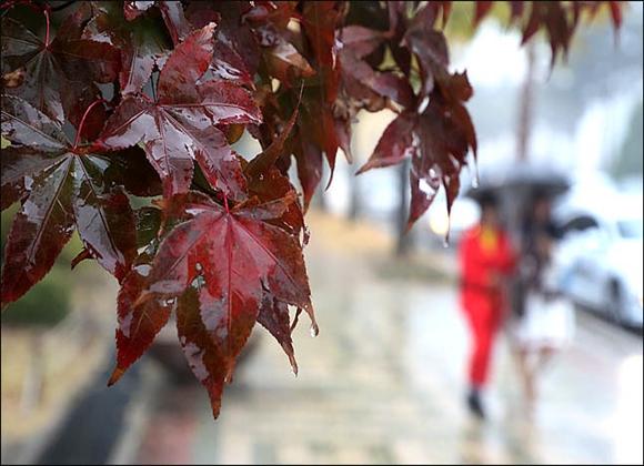 가을 스케치ⓒ데일리안 박항구 기자