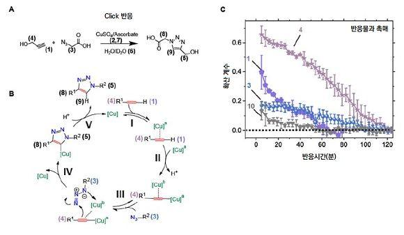 화학반응 모식도와 각 분자의 확산계수ⓒIBS
