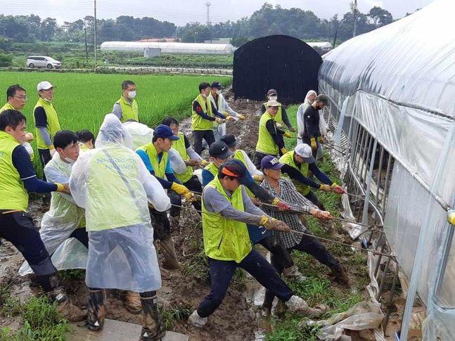 지난 11일 NH농협은행 중앙본부 임직원들이 50여명이 경기도 이천시 집중호우 피해 지역을 방문하여 폭우로 침수된 비닐하우스 피해시설을 찾아 복구 작업을 실시 중에 있다.ⓒNH농협은행