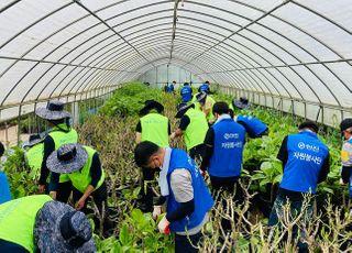 한진·농협, 집중호우 피해지역서 수해복구 작업