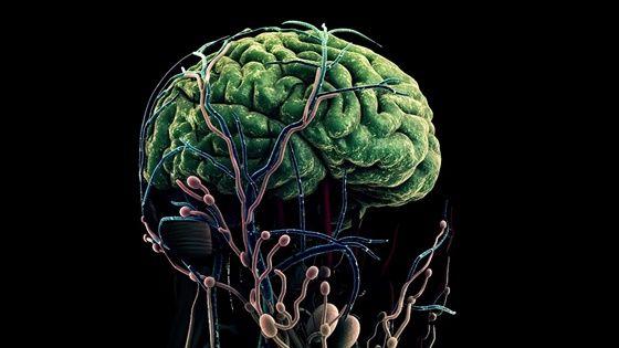 인간의 뇌를 형상화한 그래픽 ⓒ삼성전자