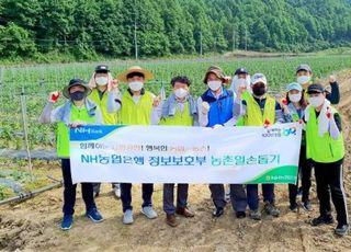 [포토] NH농협은행 정보보호부, 민통선 마을 농촌일손돕기
